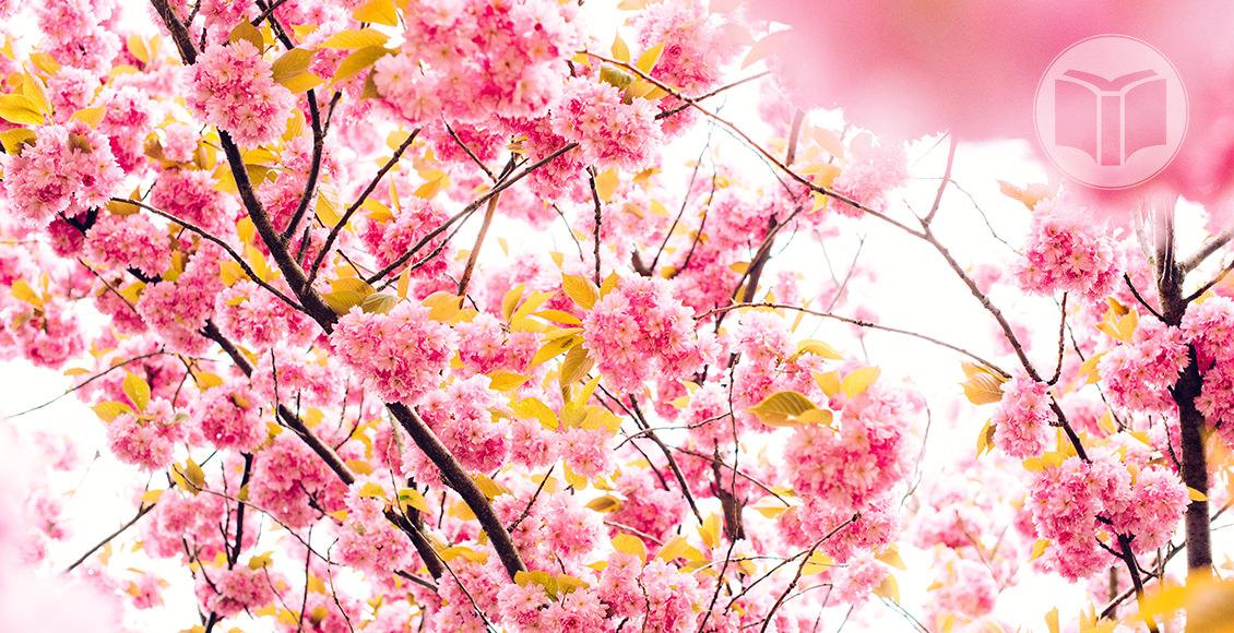 Pace - Devoțional femei. Rugăciunea este un alt mod de a avea pace. Cum? În momentul în care te rogi îţi exerciţi credinţa în Dumnezeu. Situaţia cu care te confrunţi astăzi poate nu diferă de cea de mâine, dar gândirea ţi se schimbă atunci când te rogi. Priveşti problema diferit. Rugăciunea te schimbă.